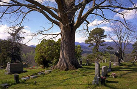 Bedford County Tn Cemeteries